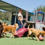 desinfección de albergues de animales