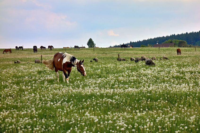 Cómo afecta el rotavirus en una ganadería mixta y qué medidas de bioseguridad aplicar.