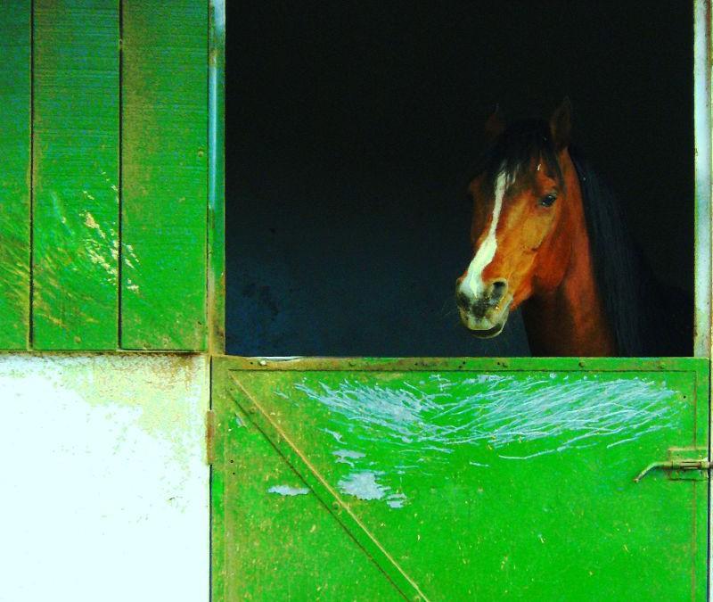 Bioseguridad: Limpieza de la cuadra del caballo