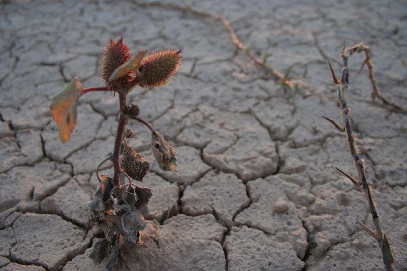 Efectos de la sequía en los insectos y plagas