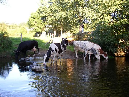 Los tratamientos del agua y su importancia para la bioseguridad