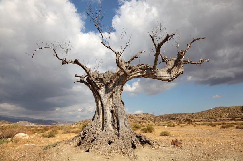 efectos de la sequía en plantas