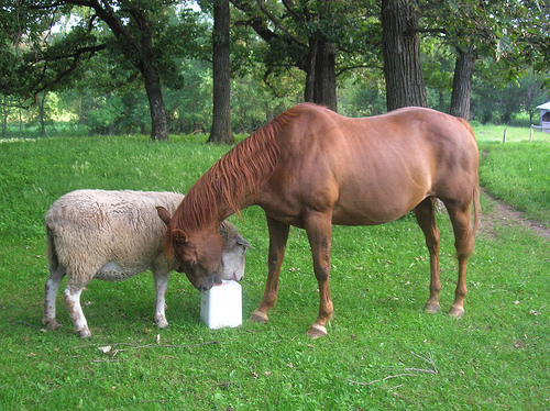 Bioseguridad en ganaderías mixtas