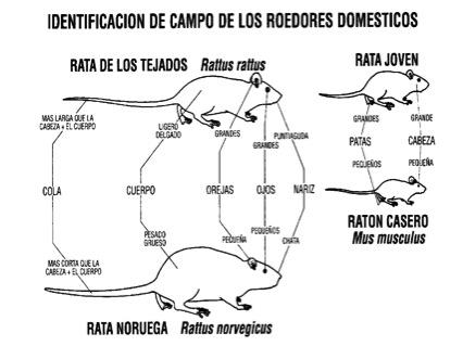 Identificación de campo de los roedores domésticos