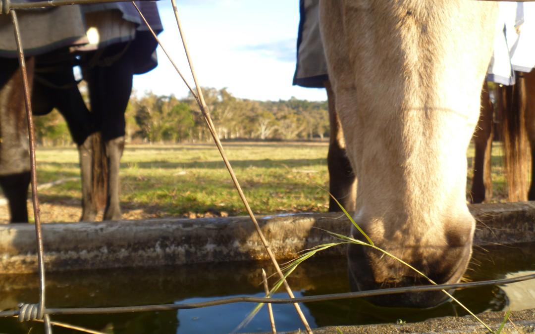 Especial caballos: El agua de bebida en verano. Consumo, control y tratamiento