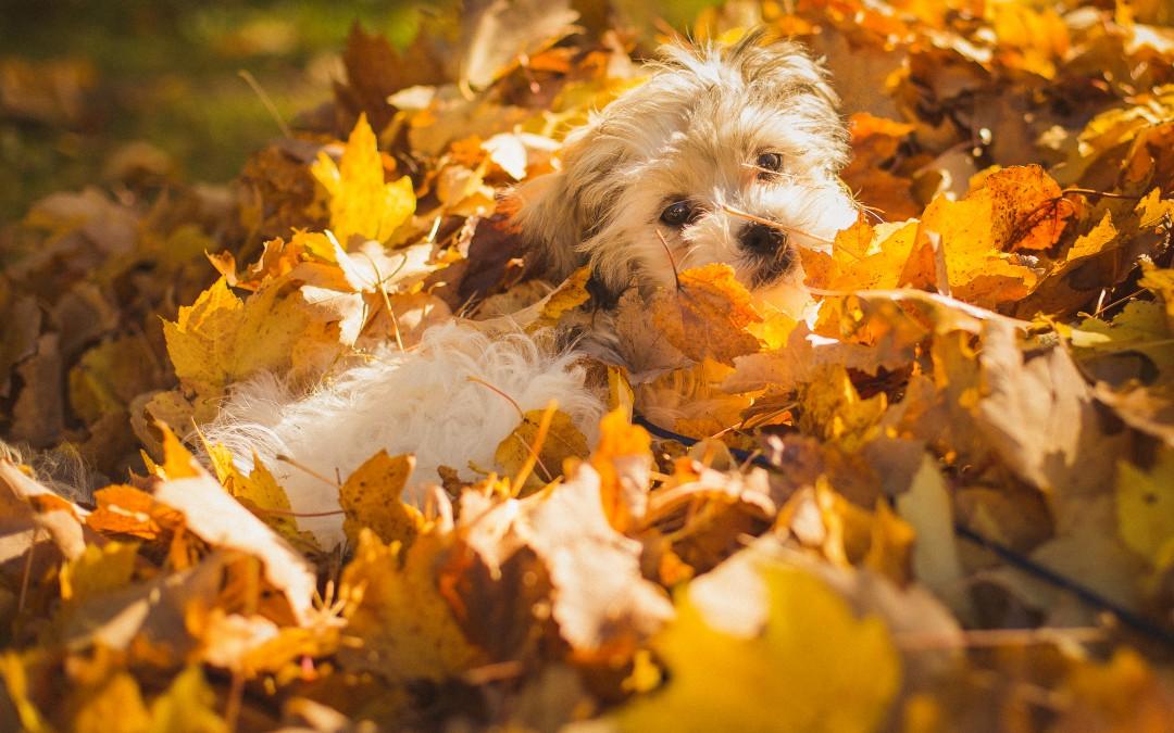 Cuidados de tu mascota en otoño