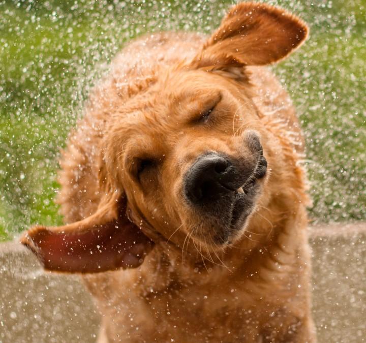 Mascotas: Pulgas y garrapatas en nuestros perros