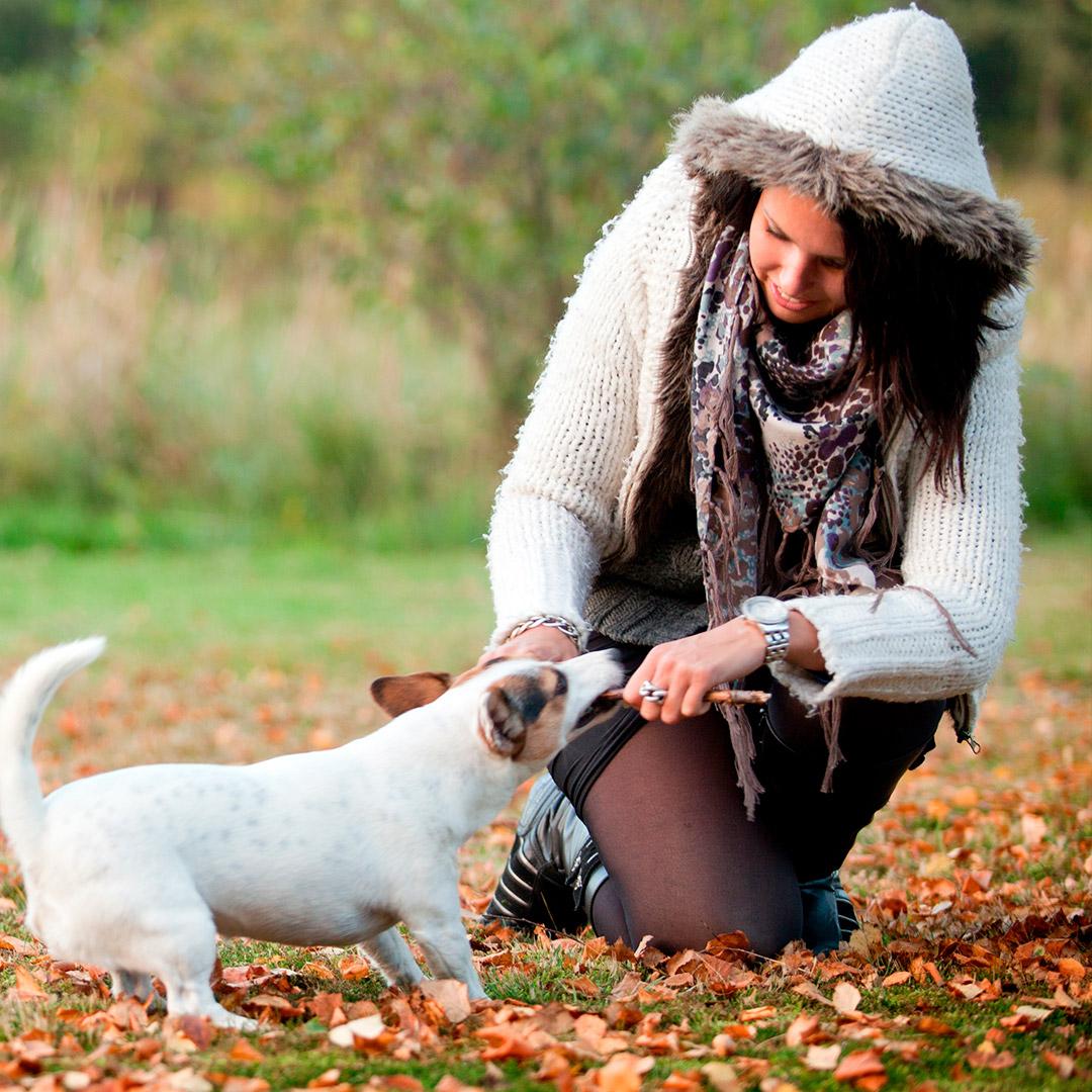 cuidado de las mascotas en otoño