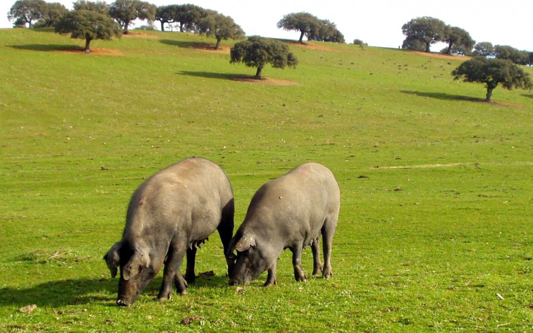 Zotal patrocina el I Foro Porcino Nutrofar