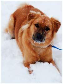Cuidados de nuestra mascota en invierno