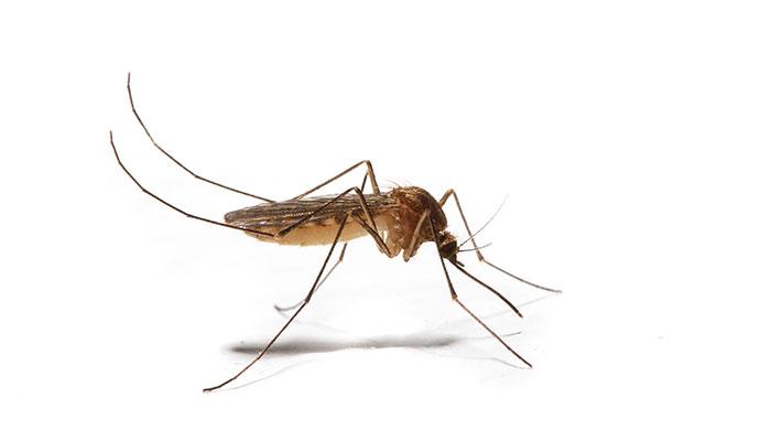 Cómo aliviar picaduras de mosquitos