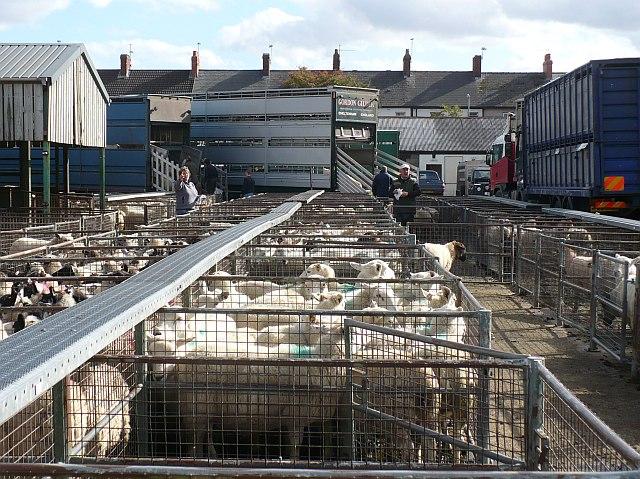 Cómo desinfectar el transporte de ganado