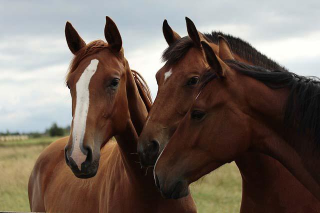 Aprende a limpiar los caballos de tu granja