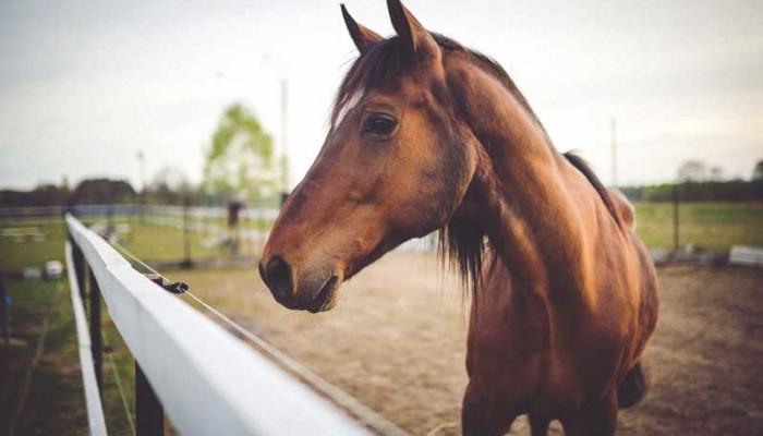 Cómo cuidar caballos en invierno