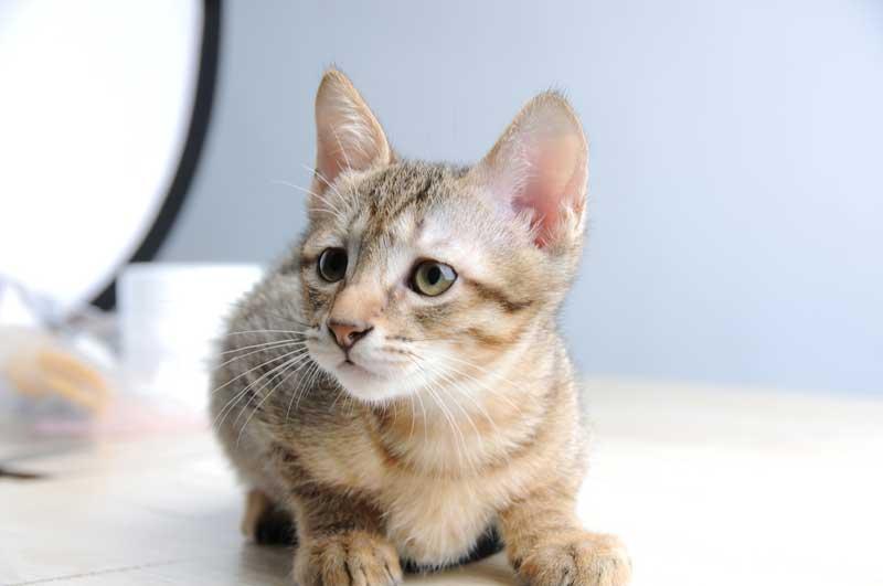Desparasitar gatos y cómo evitar plagas en tus mascotas