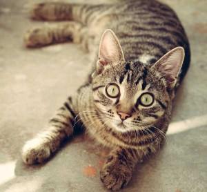 Desparasitar gatos y prevenir plagas