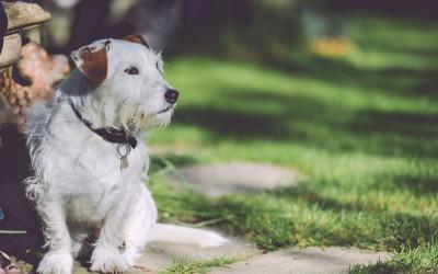 Pipetas antiparasitarias para mascotas. Ventajas y formas de uso.