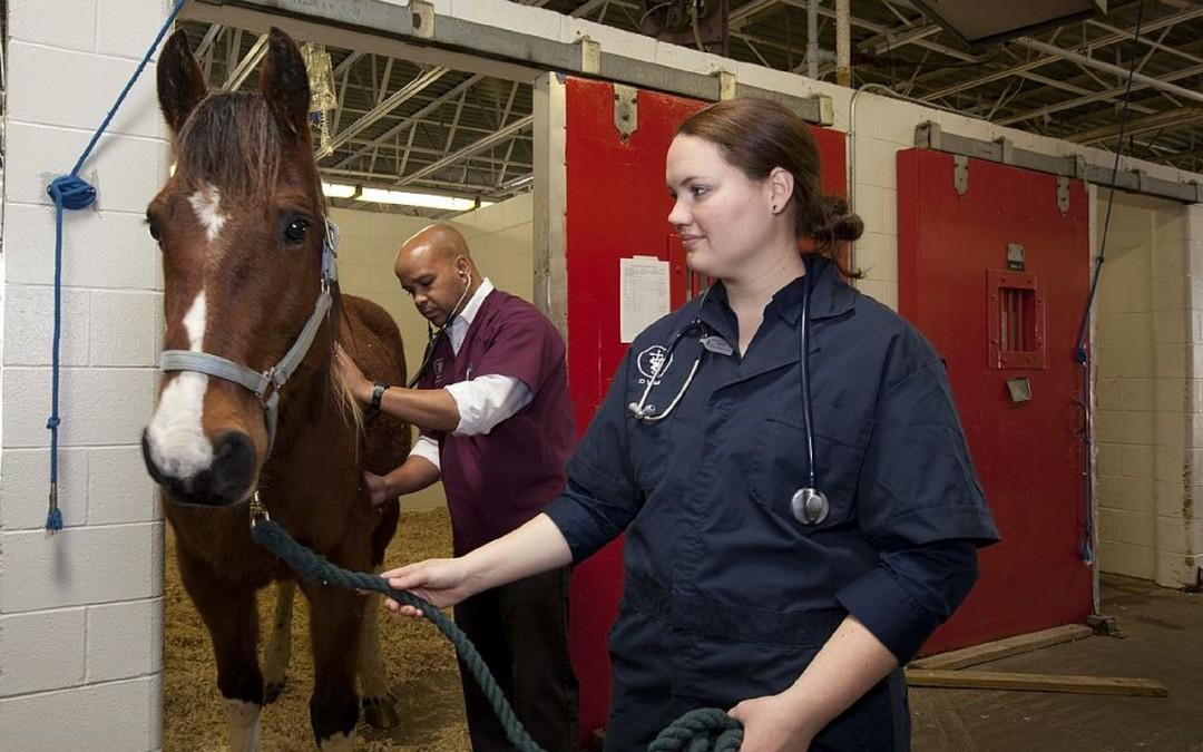 Productos farmacológicos veterinarios que puedes necesitar en tu granja