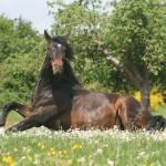 Cuidados caballos en meses de calor