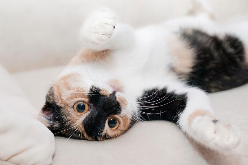 Productos con ingredientes naturales - gato
