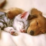 Productos con ingredientes naturales para cuidar a tus mascotas