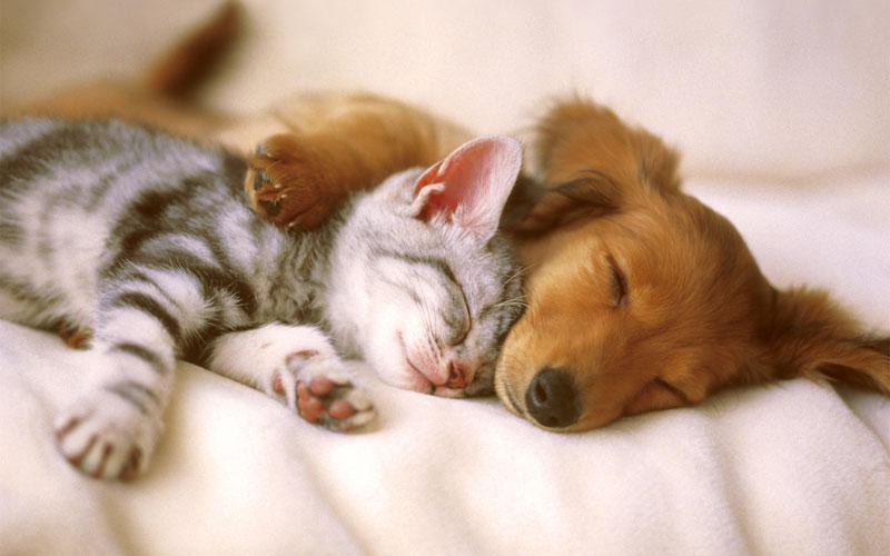 Cuida a tus mascotas con productos con ingredientes naturales
