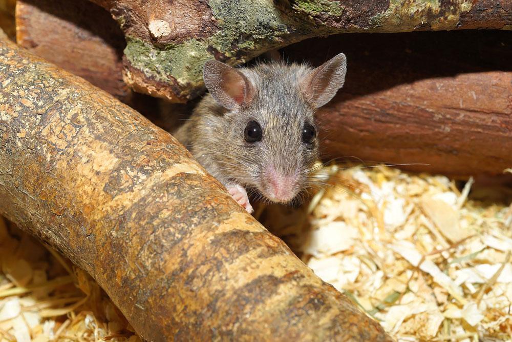 Raticidas en bloques - ratón