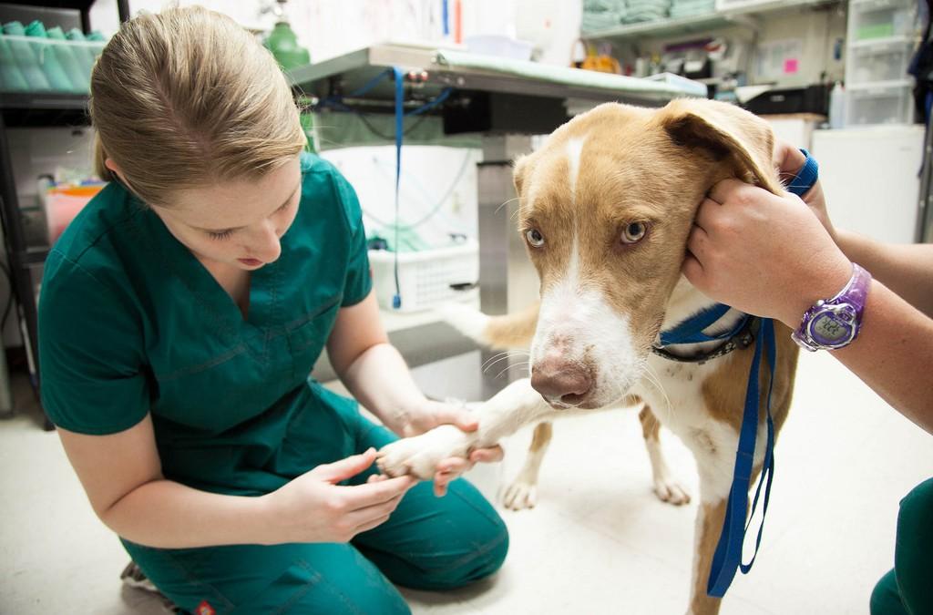 Cómo limpiar y desinfectar una clínica veterinaria