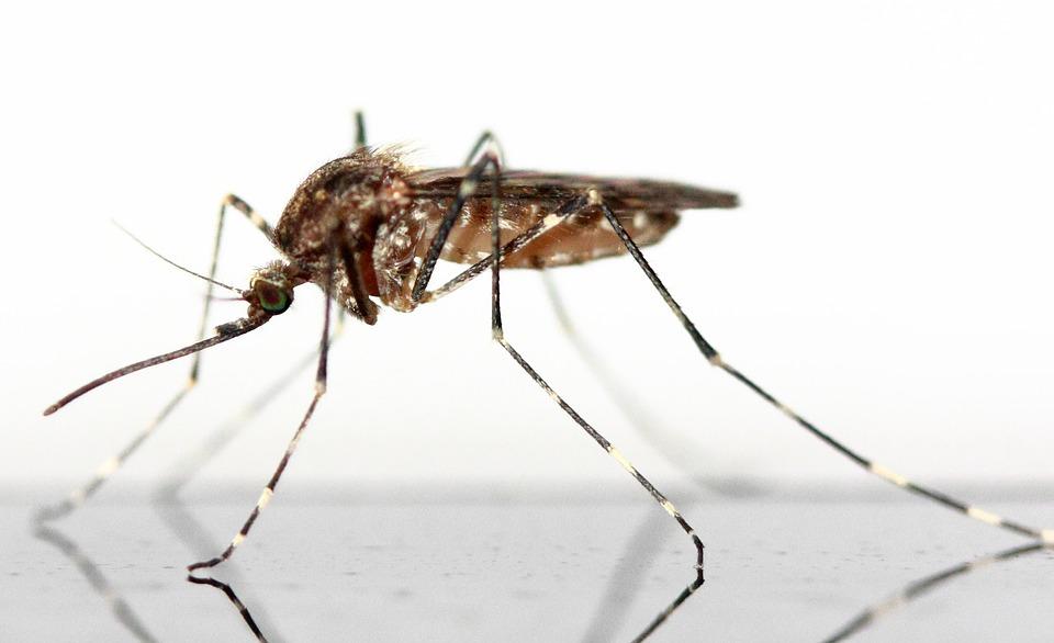 Cómo protegerte de las picaduras de insectos este verano