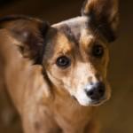 Collares antiparasitarios para mascotas