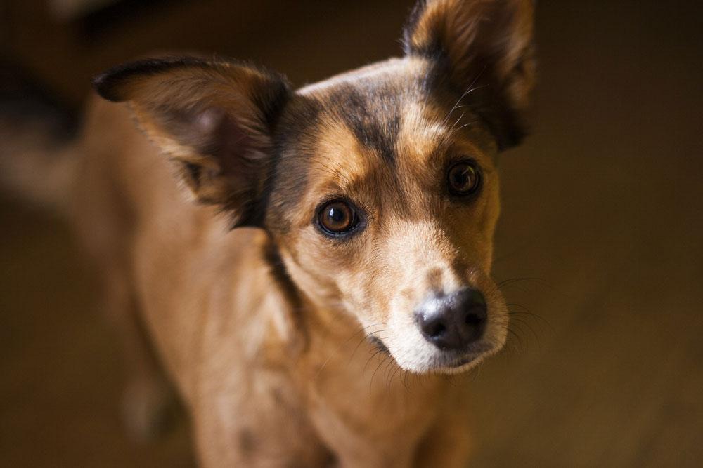 Collares antiparasitarios para mascotas, beneficios y ventajas