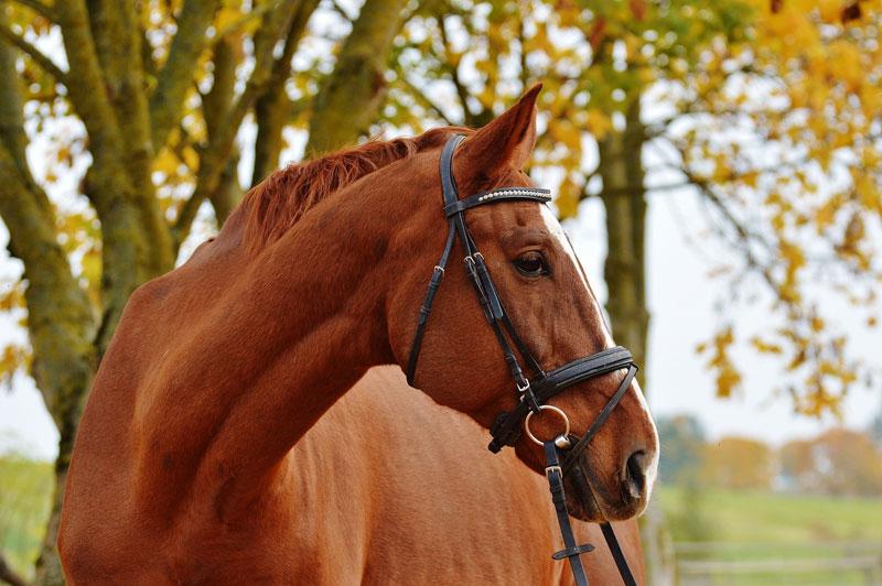 Cómo detectar síntomas en caballos y desinfectar establos
