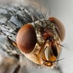 zotallabs - control de moscas en granjas de cerdos