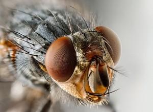 Moscas, cómo prevenir plagas