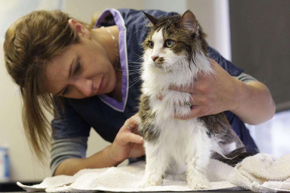 Cómo bañar a un gato con champú Parasital