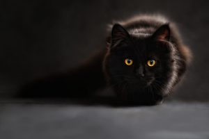 Los mejores tratamientos para que tu gato no tenga parásitos