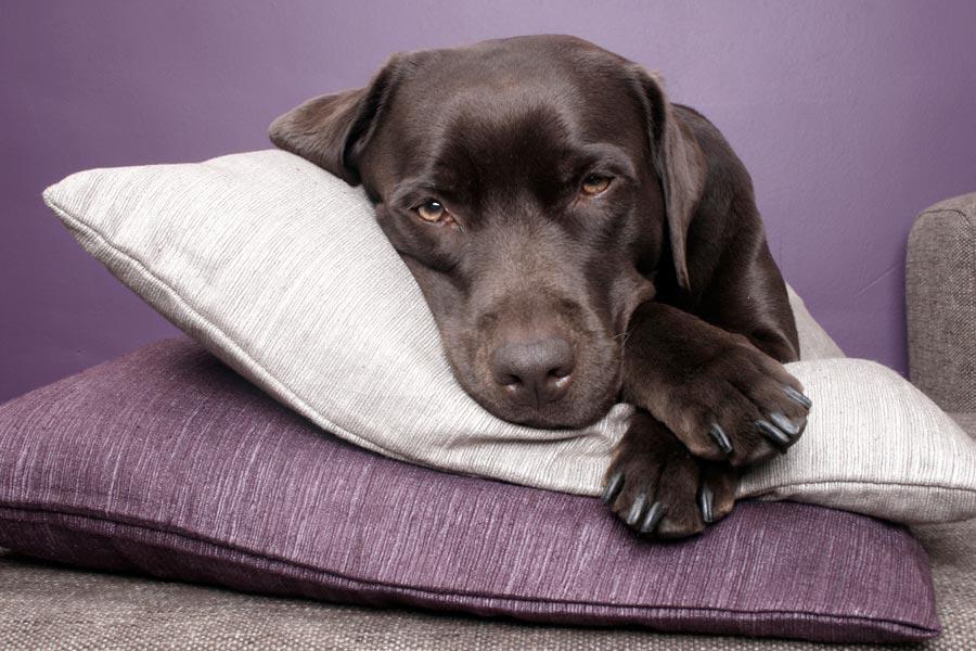 Cómo elegir la pipeta antiparasitaria para tu perro