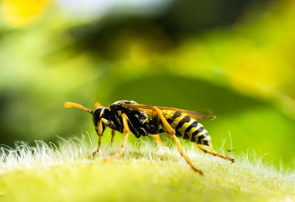 Zotal lanza el insecticida ARPON ALFASECT