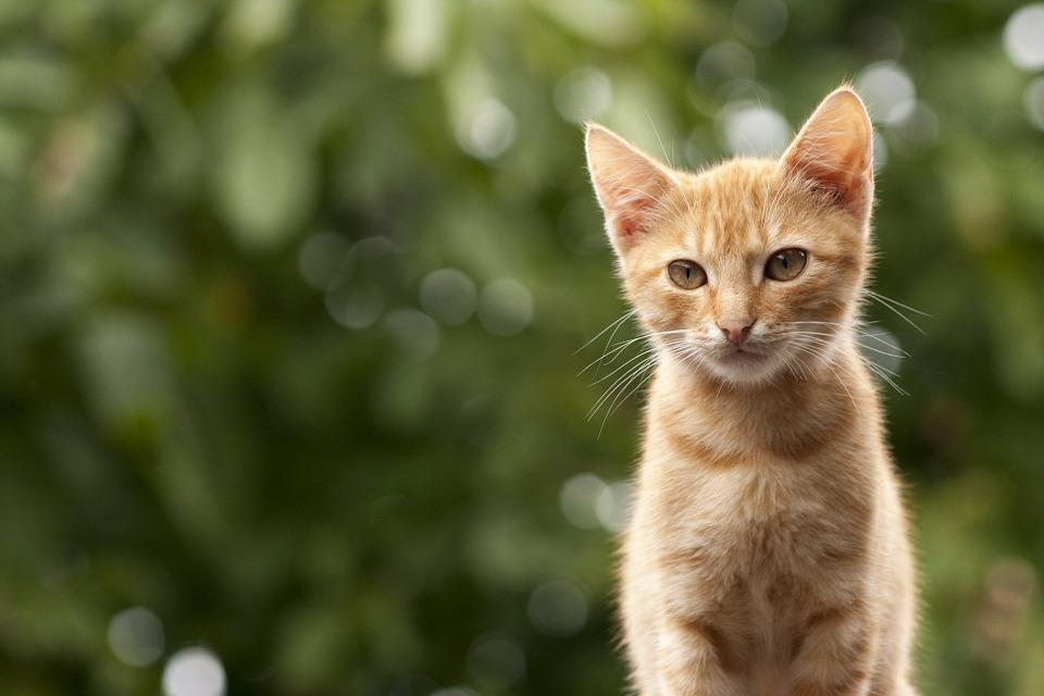 Cómo cuidar a tu gato: todo lo que necesitas saber