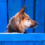 imagen destacada del artículo sobre cómo limpiar una residencia canina en el blog de Zotal