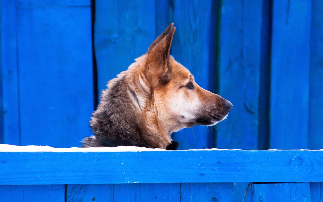 Cómo limpiar una residencia canina