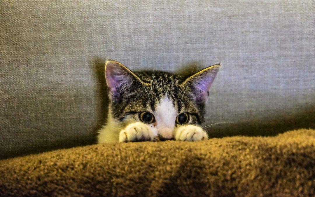 4 consejos de higiene para gatos adoptados