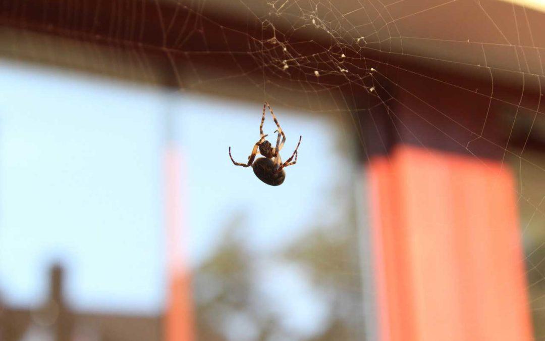 Cómo eliminar las arañas en casa