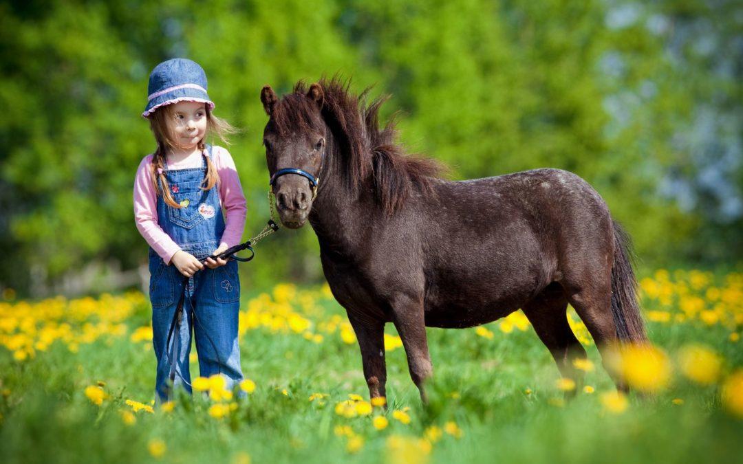 El cuidado y la higiene de los caballos miniatura