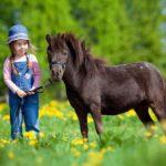 Imagen de niña con caballo miniatura   Zotal