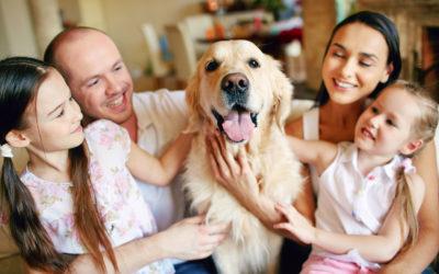 Uso de insecticidas con mascotas en casa: el ejemplo de Arpon Deltasect 015 RTU