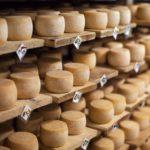 ácaro del queso