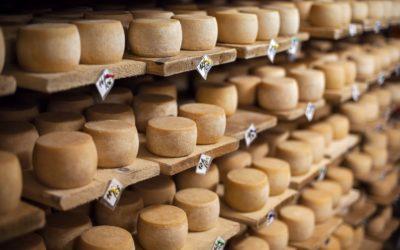 Cómo prevenir y eliminar el ácaro del queso