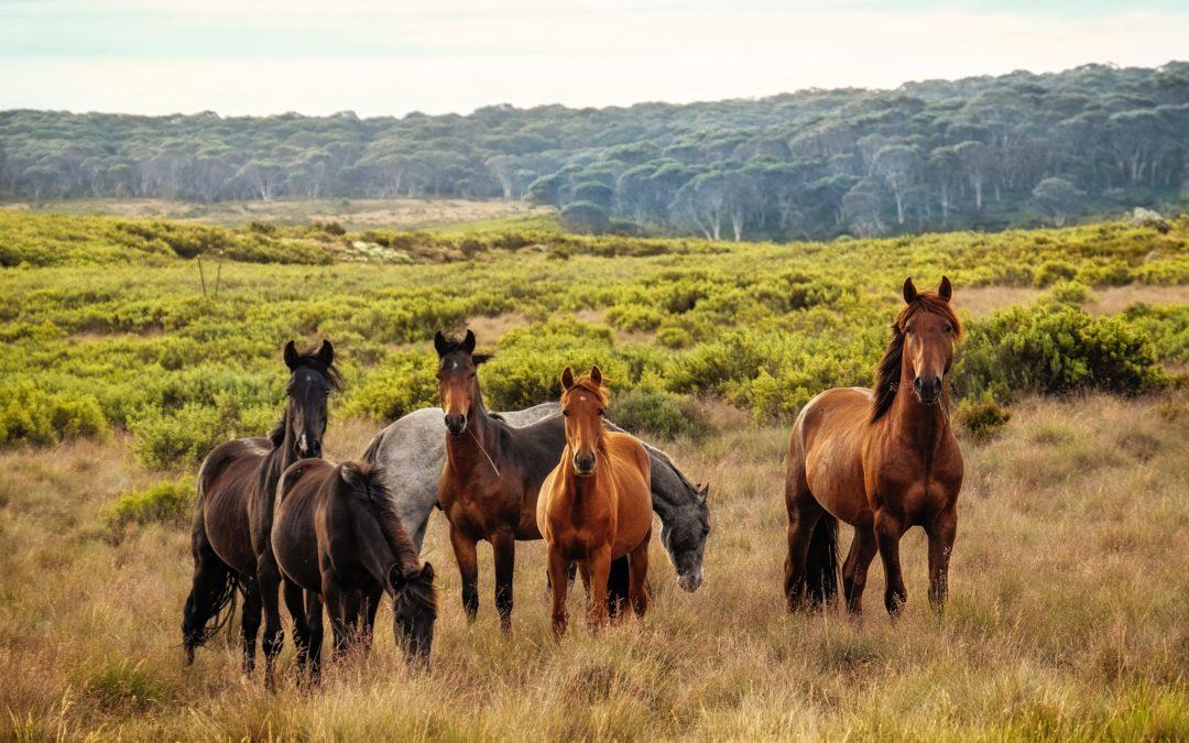 Enfermedades de caballos más habituales y cómo prevenirlas