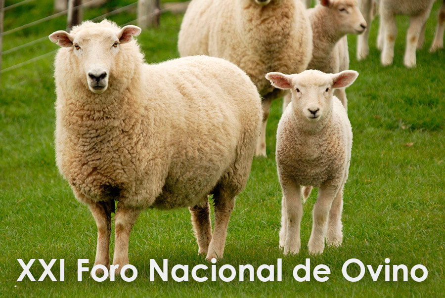 Zotal colabora en el XXI Foro Nacional de Ovino